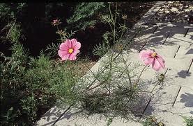 Unbenannt Blume wegesrand