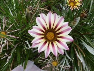 bunte Blüte