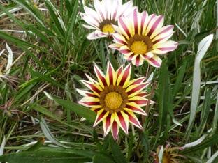 herrliche Blüten