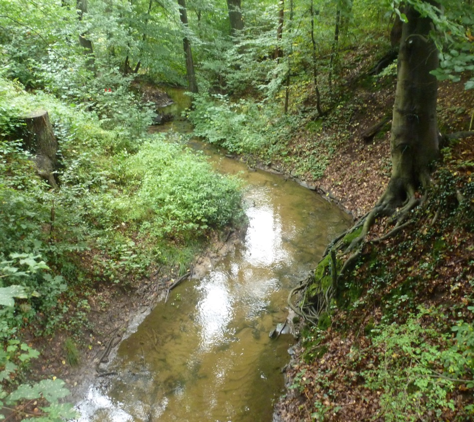 Bach durch den Wald