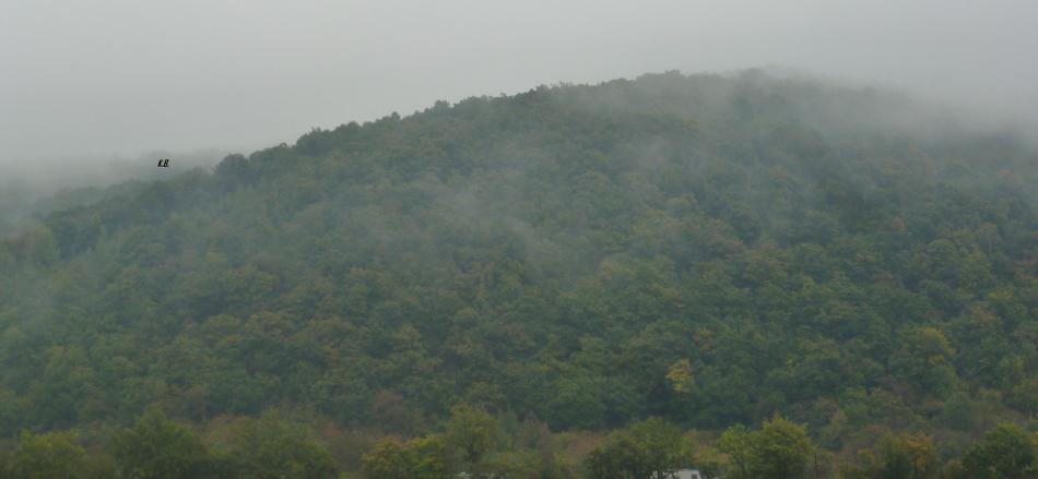 Der Wald im Nebel
