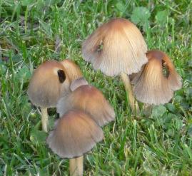 Giftige Pilze