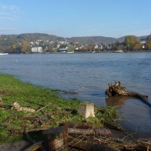 Überschwemmtes Rheinufer
