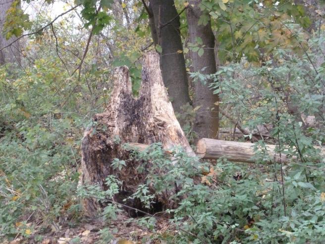 Ein alter Baumstumpf