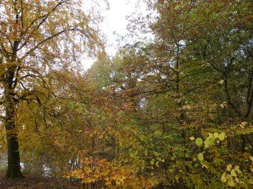 Der Wald in Saaler Mühle