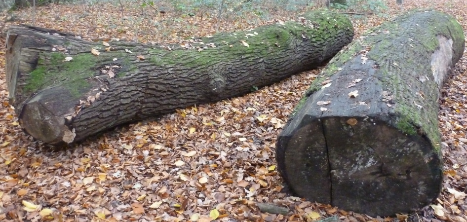 Zwei alte Baumstämme
