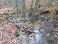 Bachbett im Wald