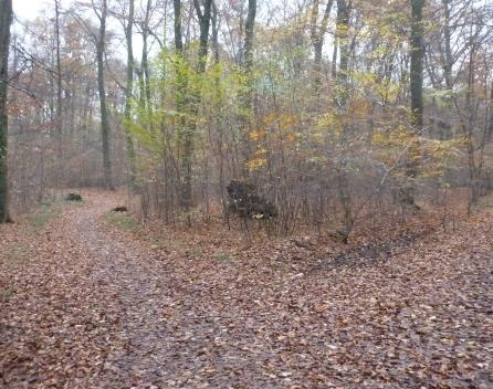 Der Waldweg im November