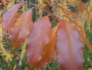 lange Herbstblätter