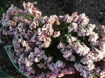 gefrorener Blütenbusch