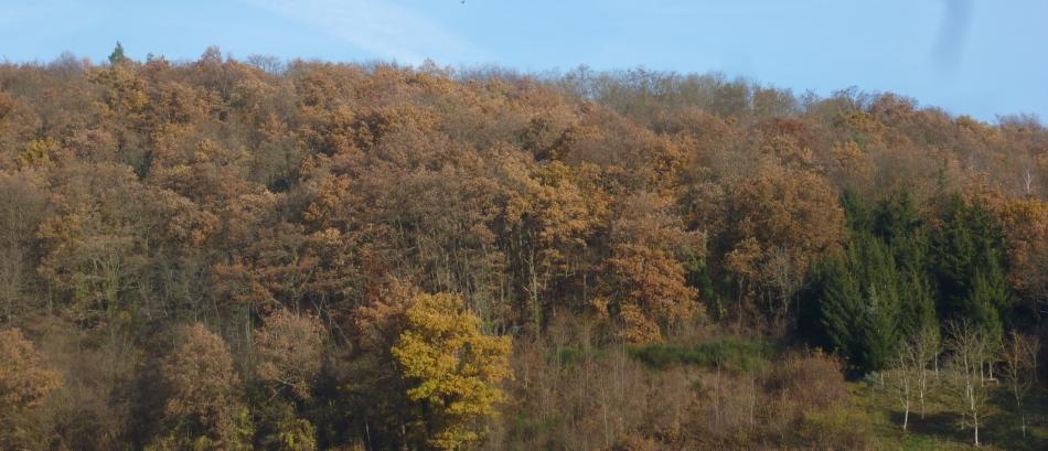 Der Herbstwald am Wanderweg