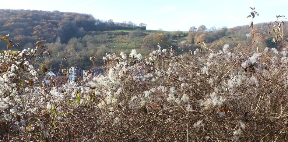 Winterblütenbusch