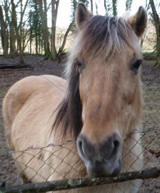 Pferd von der Schwanenteich Wiese