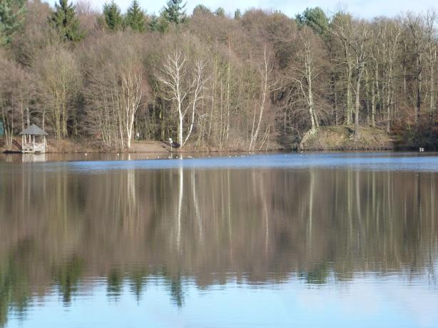 Die Baumspiegelung am See