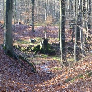Der Wald einsam und leer