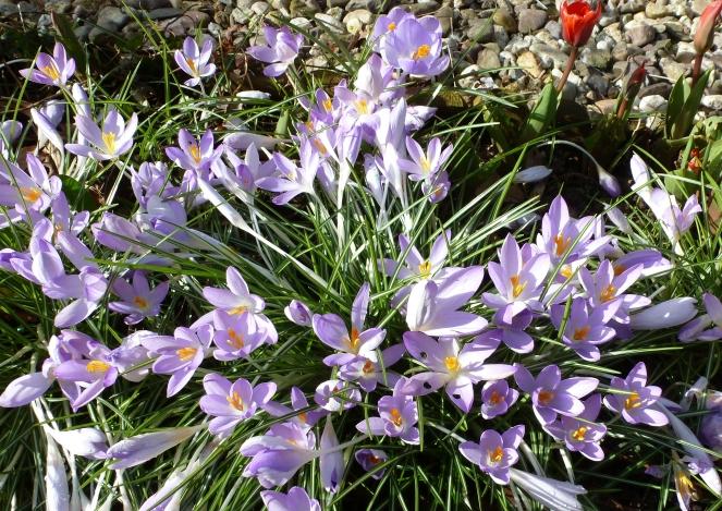 Diese Farben vielfallt bringt nur der Frühling hervor