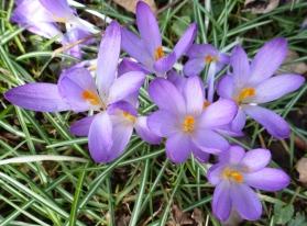 So schöne zarte Blüten