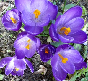 So was schönes bringt uns der Frühling