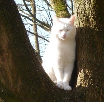 Weiße Katze hält Ausschau nach unvorsichtigen Vögeln