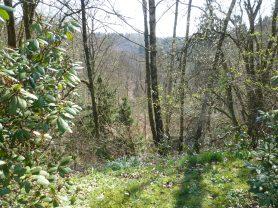 Wald im Bergischen Land
