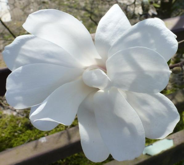 Weiße Blüte