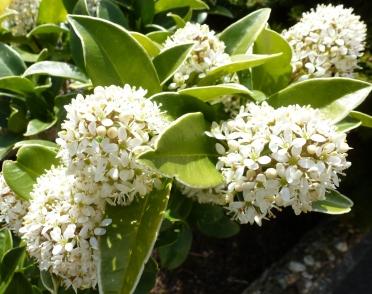 Schöner Blütenbusch