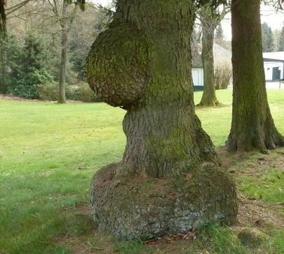 Uriger alter Baum