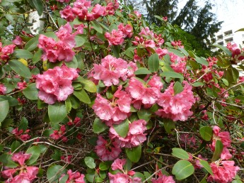 Schöne rote Blüten