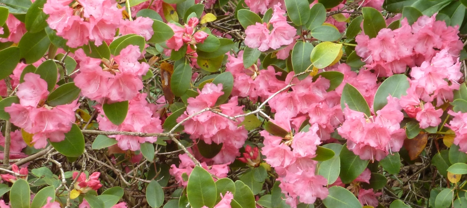 Roter Blütenbusch