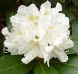 Eine weiße Blüte
