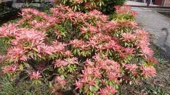 Blüten Busch