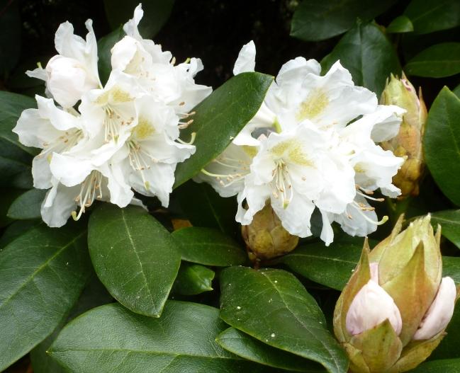 Weiße schöne Blüten