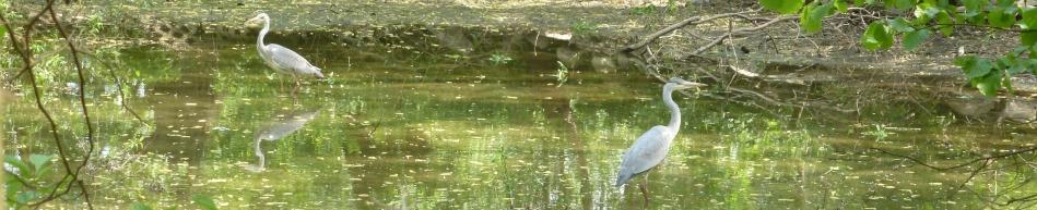 Die Reiher im hast ausgetrockneten See