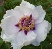 Eine wunderschöne Blüte