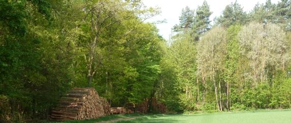 Gefällte Holzstapel