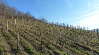Weinberge in Dernau