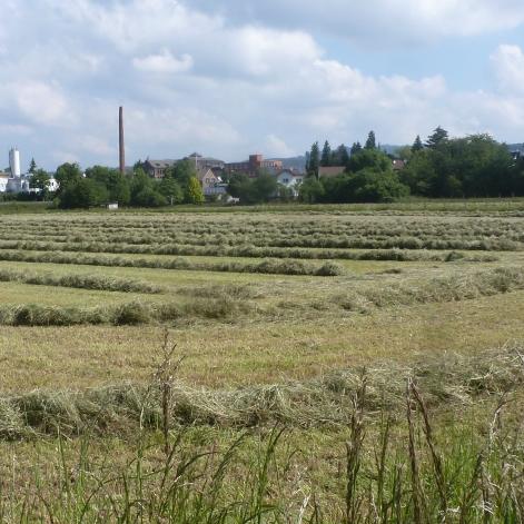 Gemähtes Gras fürs Vieh
