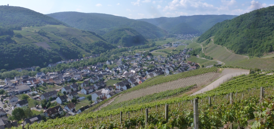 Rotweinberg