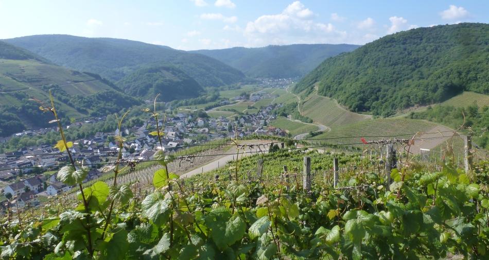 Weinberg und Weinort Dernau