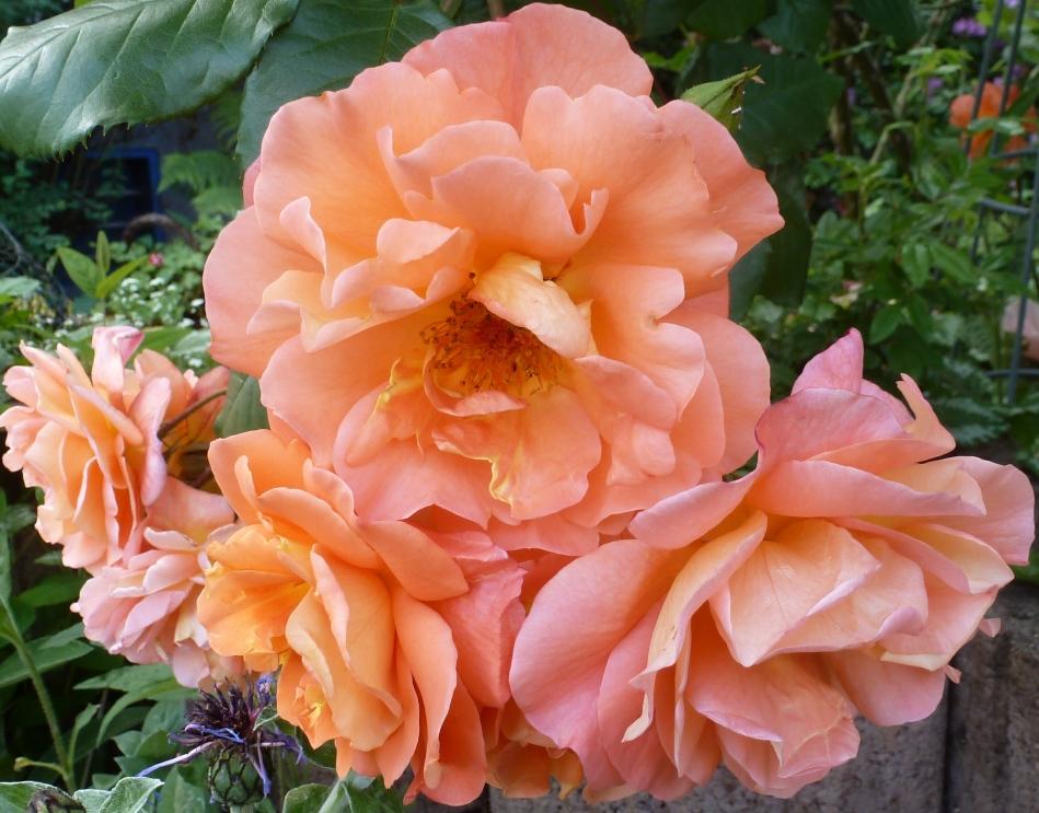 Die Rosengalerie