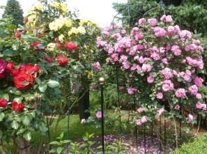 Rosen so lieblich und schön