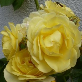Gelb ist auch schön