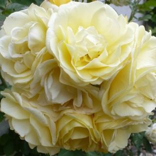 Ein gelber Rosen Blütenstrauß