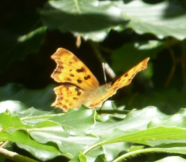 Schmetterling beim Sonnenbaden