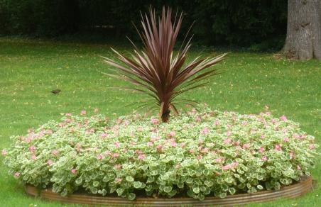 Blütenbeet mit Palme