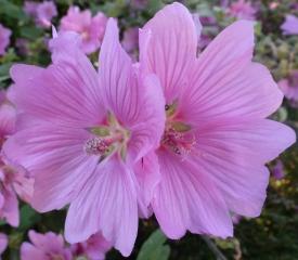 Schöne Blüten im Kurpark