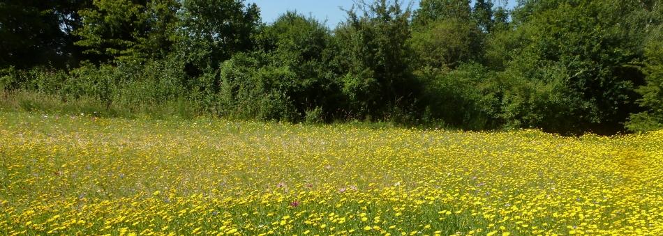 Herrliches Blütenfeld