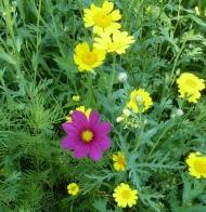 Schöne Blüten vom Blumenfeld