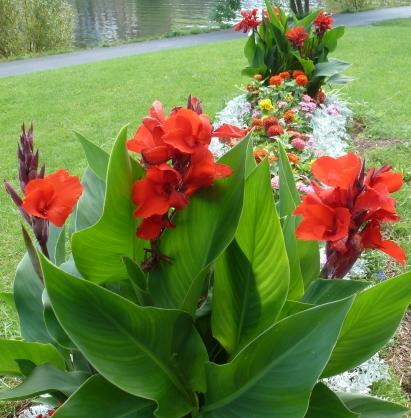 Das bunte Blütenbeet mit roter Cannablüten
