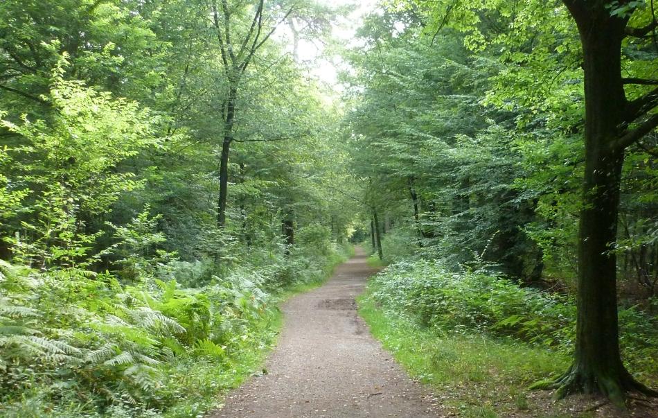 Der Waldweg Saaler Mühle